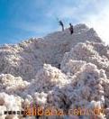 大量供应棉花,皮棉,棉籽,短绒